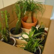 How To Safely Move Plants