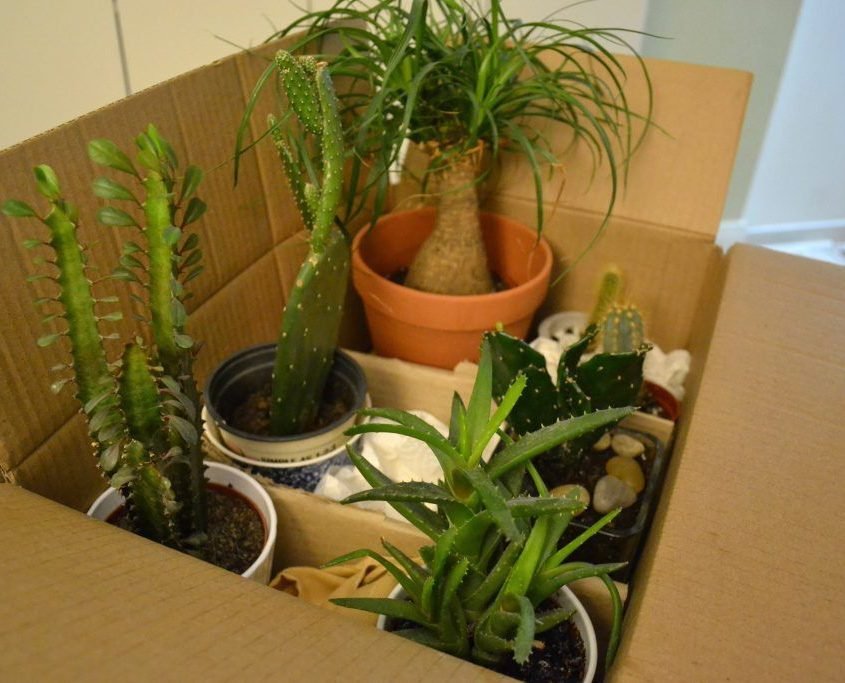 Moving Household Plants Successfully