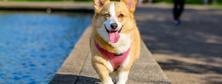 dog running on sidewalk